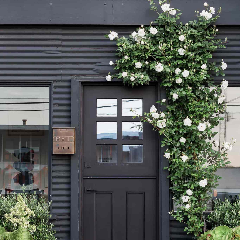 Black exterior door with rose bush.