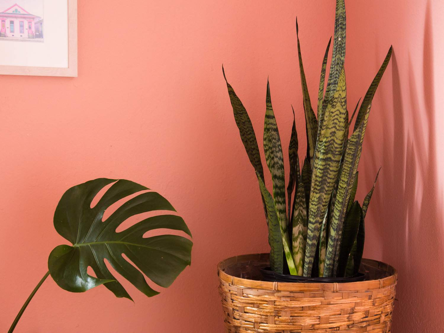coral pink walls and houseplants