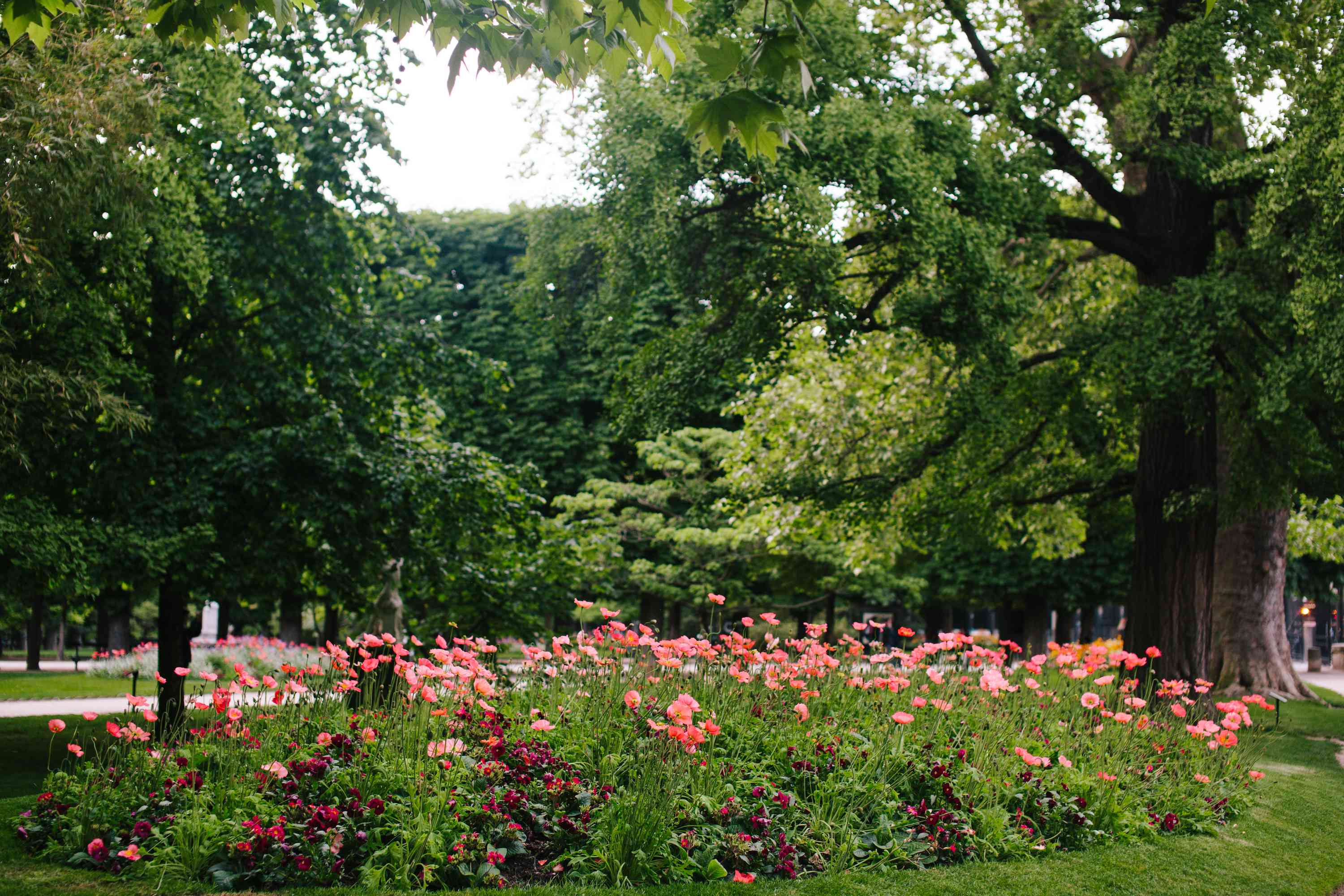Flower bed in a park filled with pink flowers.