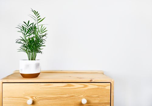 parlor palm on nightstand