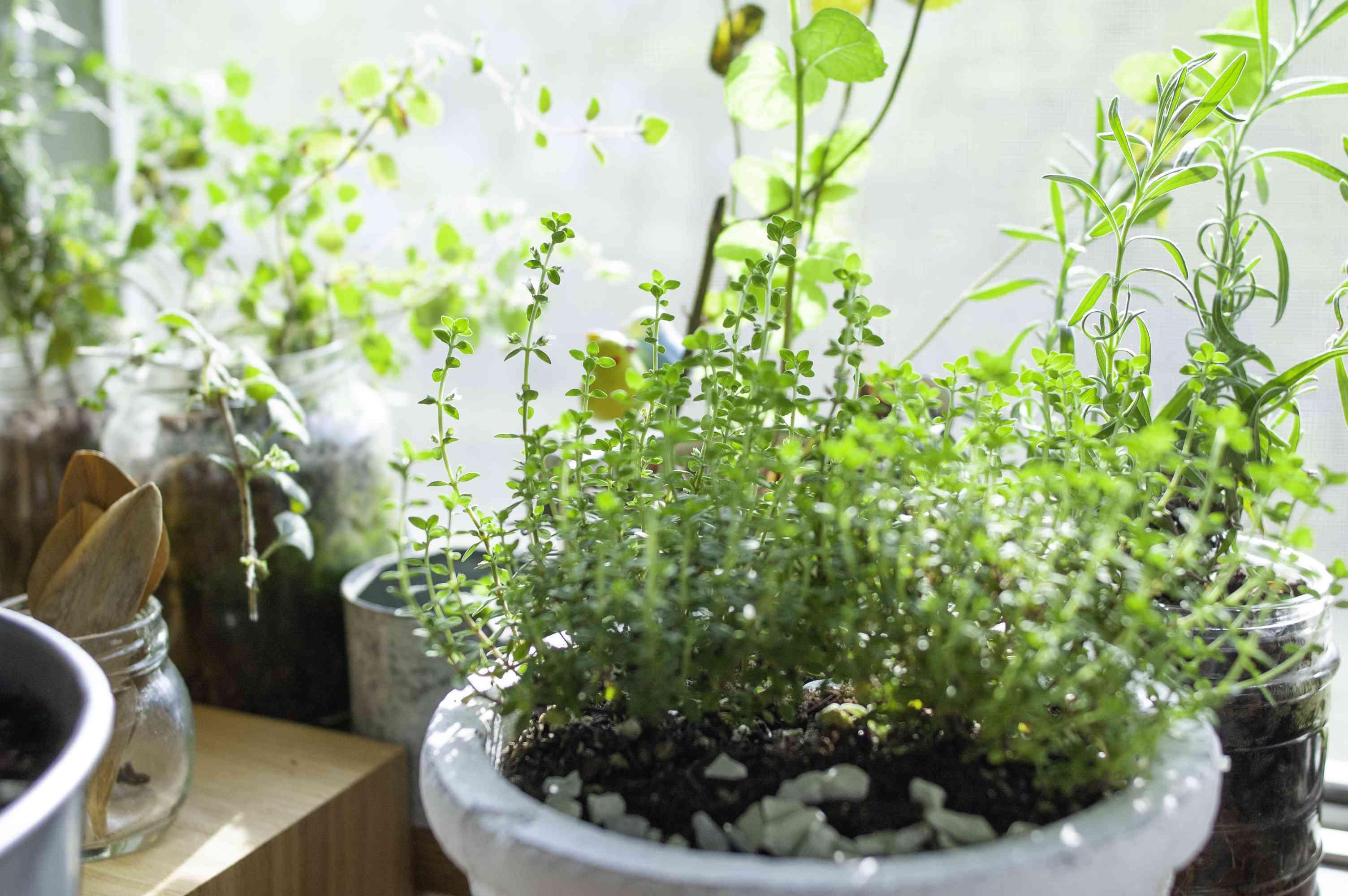 kitchen herb garden windowsill