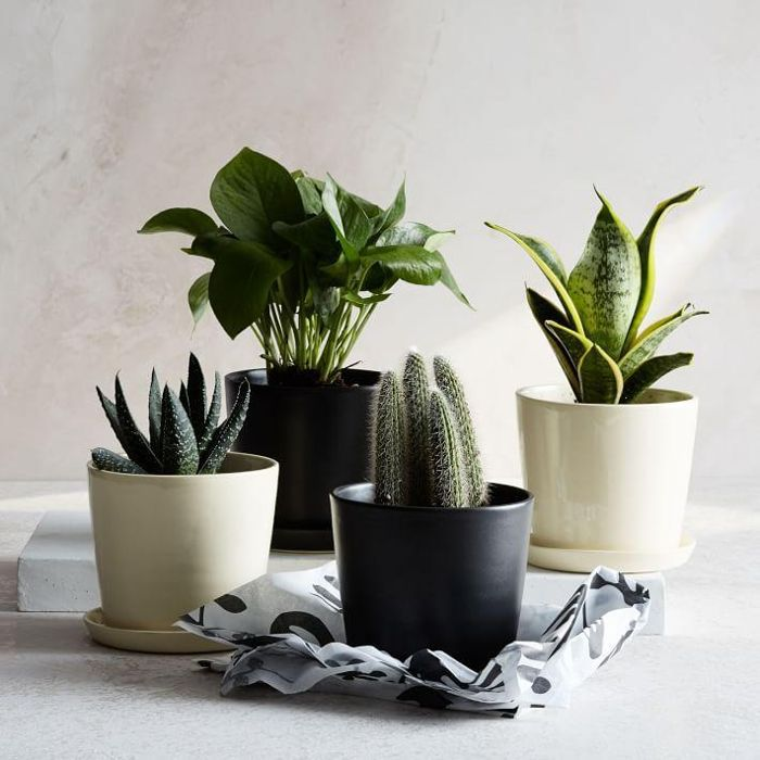 The Sill Planter + Plant