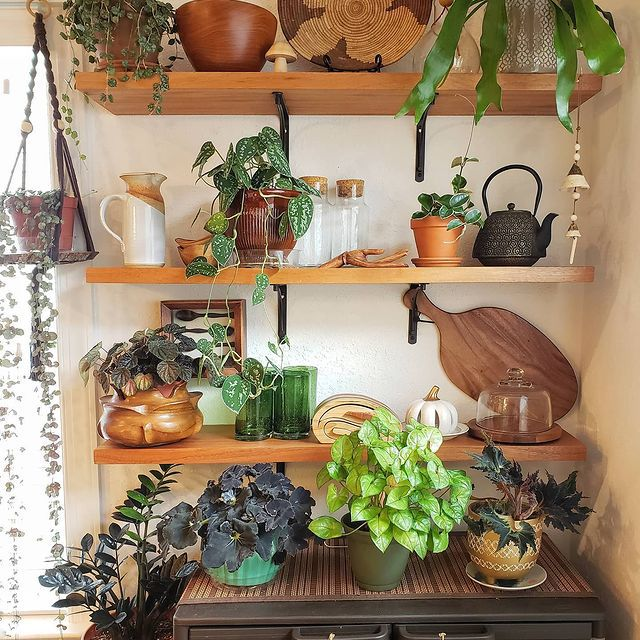 ZZ plant and assorted plants on open shelving in a kitchen corner