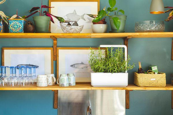 Smart Garden 3 lifestyle