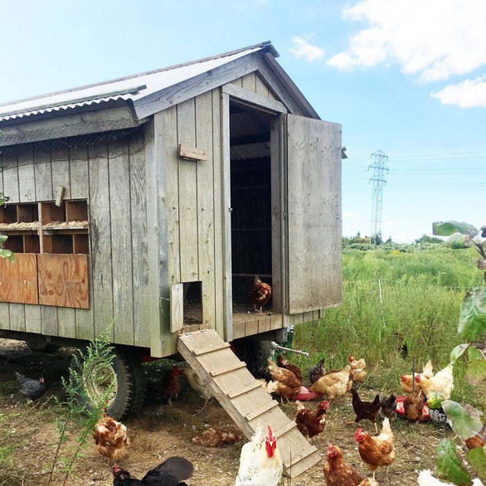 9 Chic Chicken Coop Décor Ideas