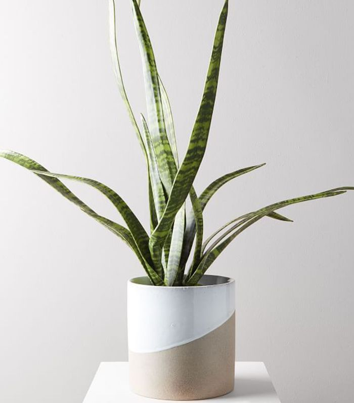 West Elm Faux Potted Snake Plant