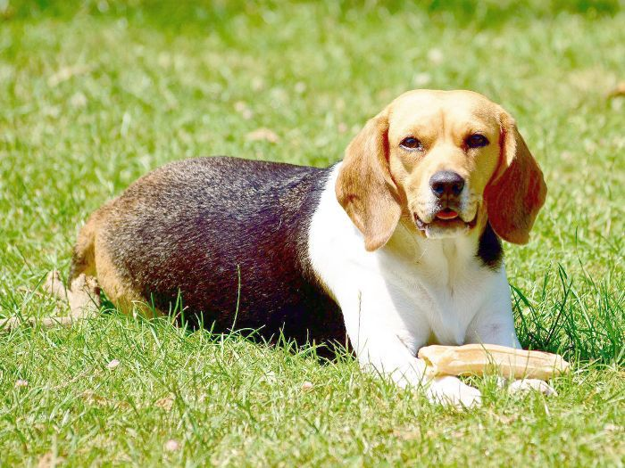 Las mejores razas de perros para familias