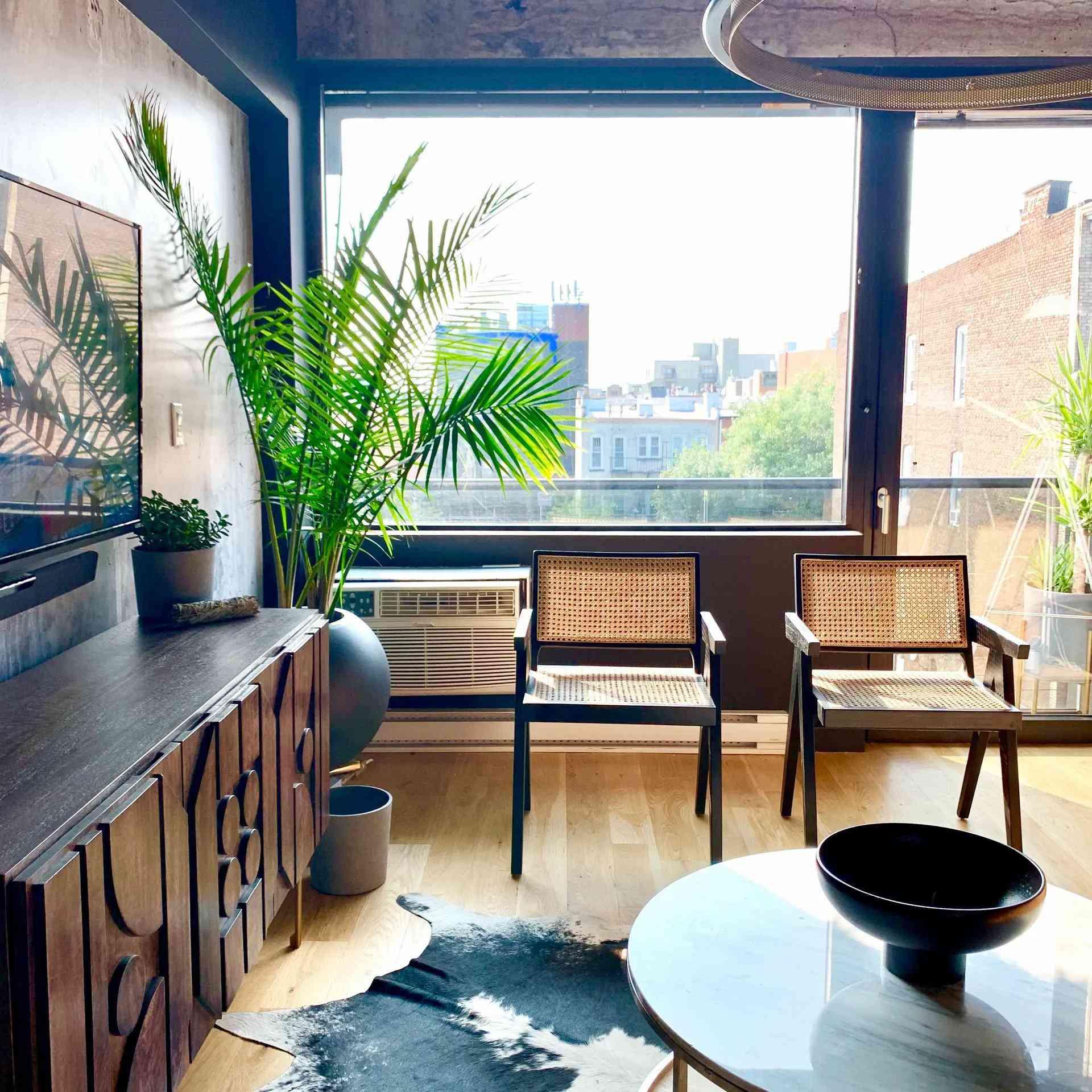 best window plant: areca palm