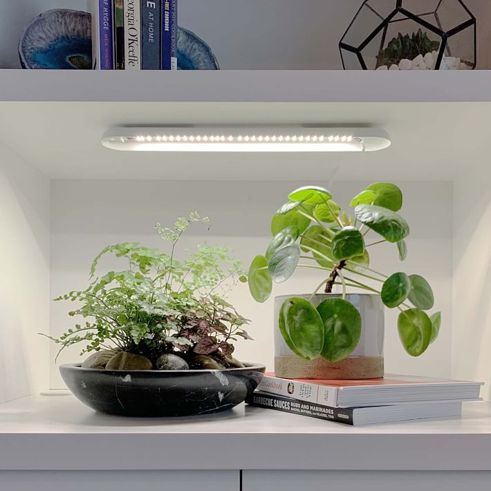Modern Sprout Grow Bar