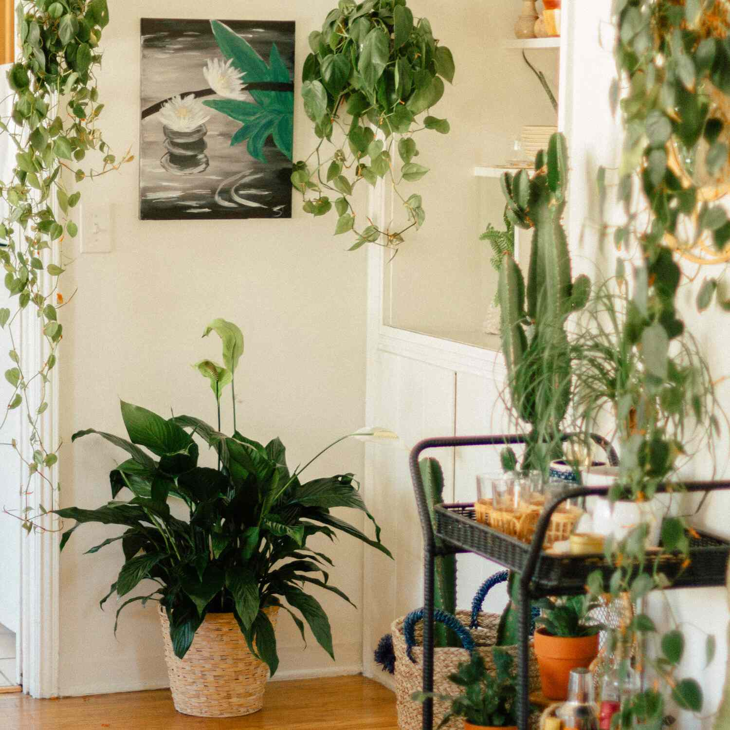 Peace lily in a basket in the corner of a room
