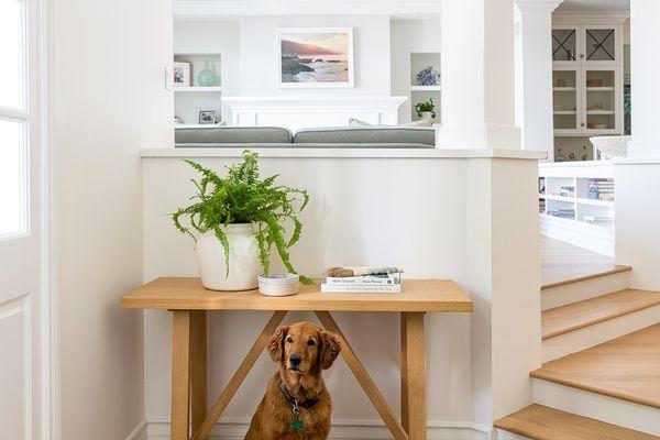 best houseplants safe for dogs: Boston fern