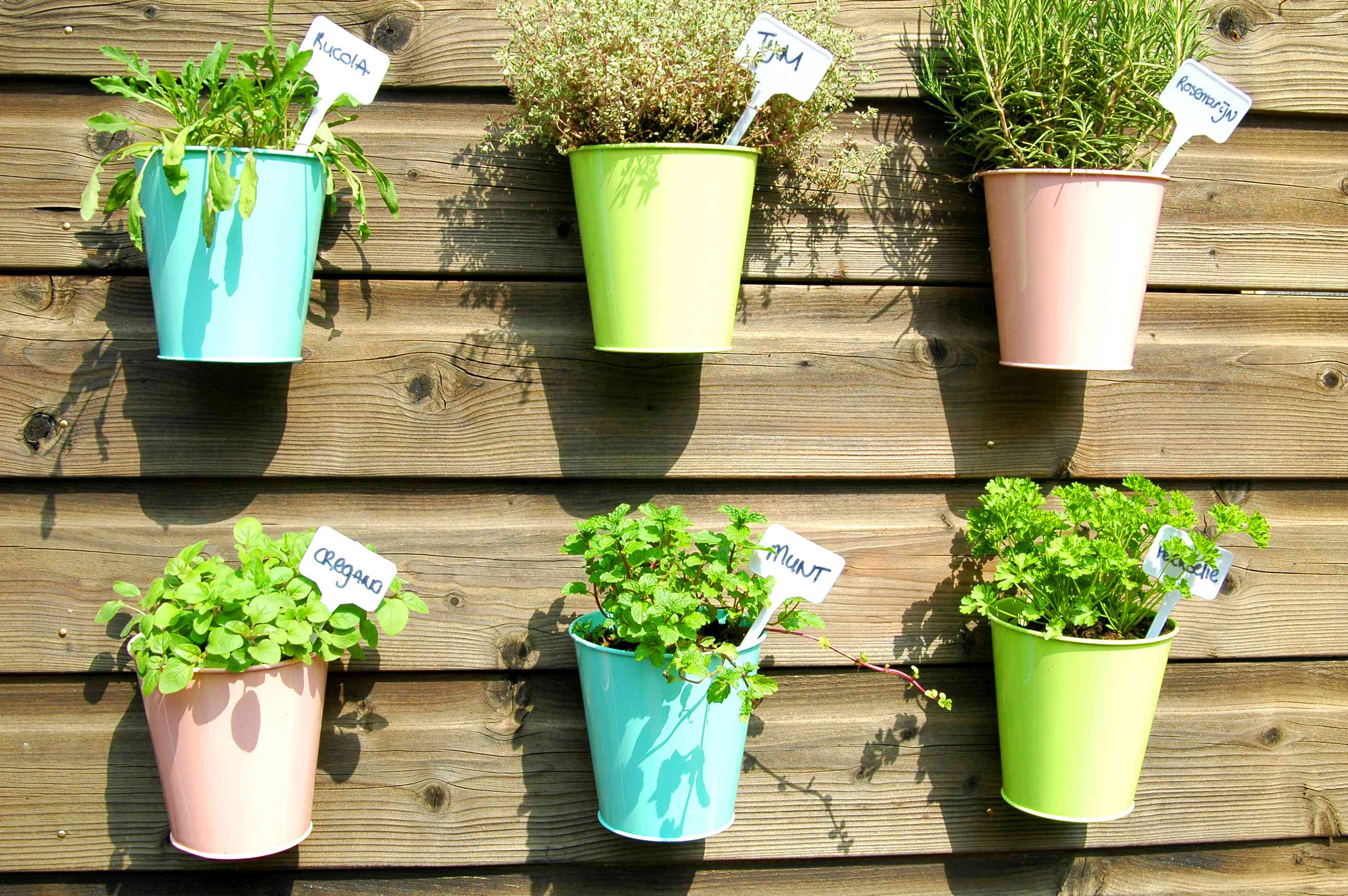 culinary herbs with labels in pastel pots mounted on wooden outdoor wall