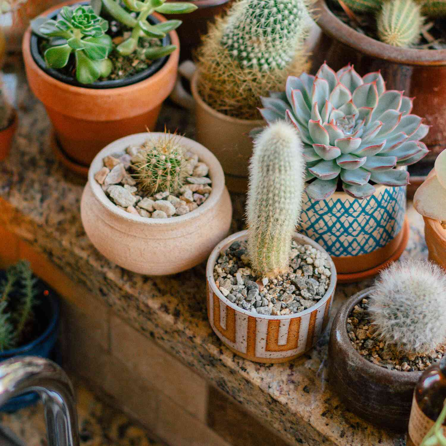 Cacti and succulents in kitchen window