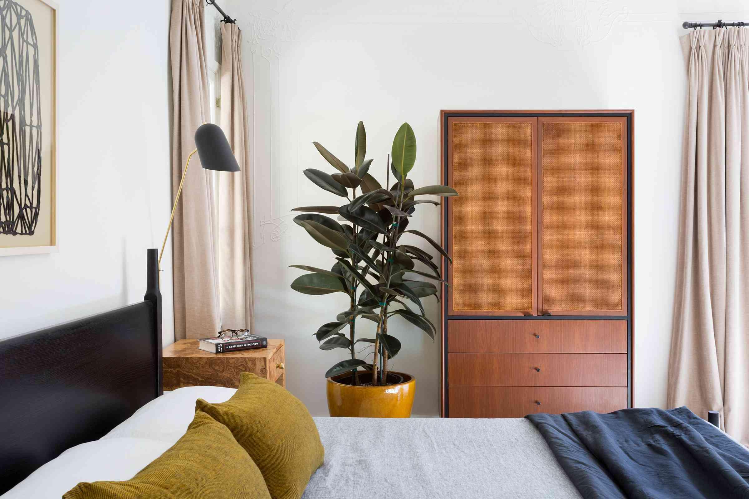 best window plants: rubber tree