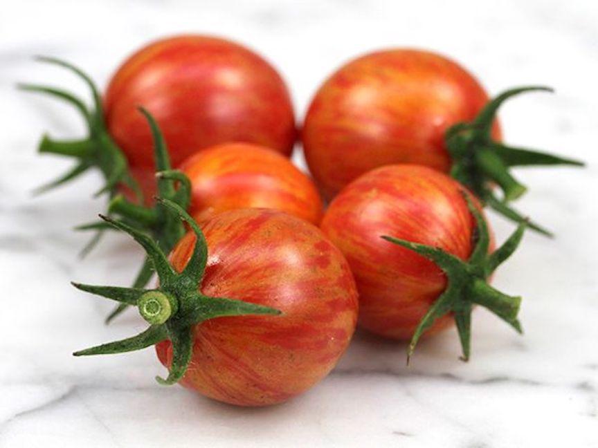 Bumble bee cherry tomato.