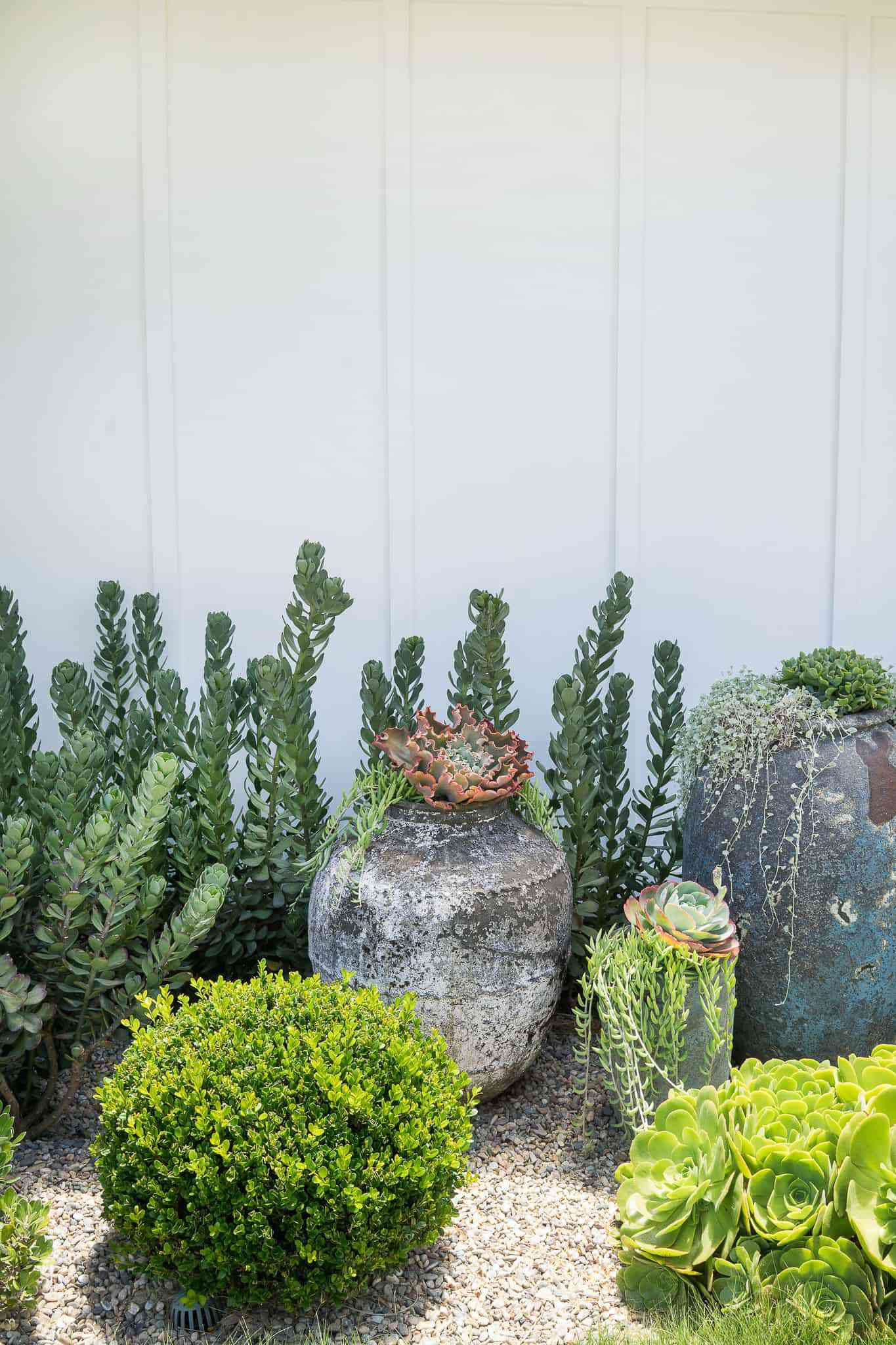Lawn with succulents and cacti.