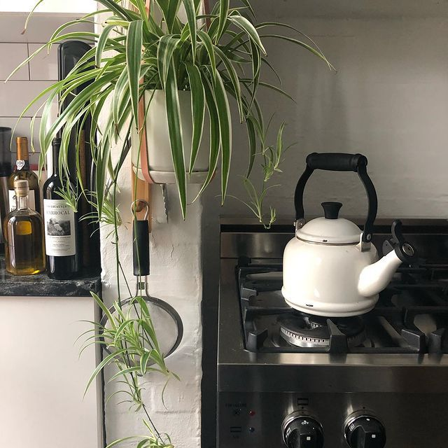 Hanging spider plant next to a range and kettle