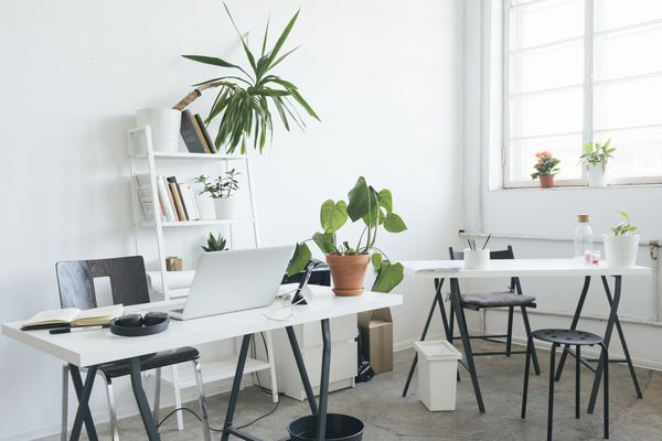 laptop and houseplants on white desk with black furniture in white room