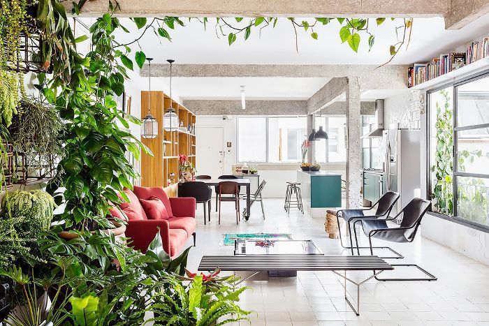A plant wall helps define an open living space