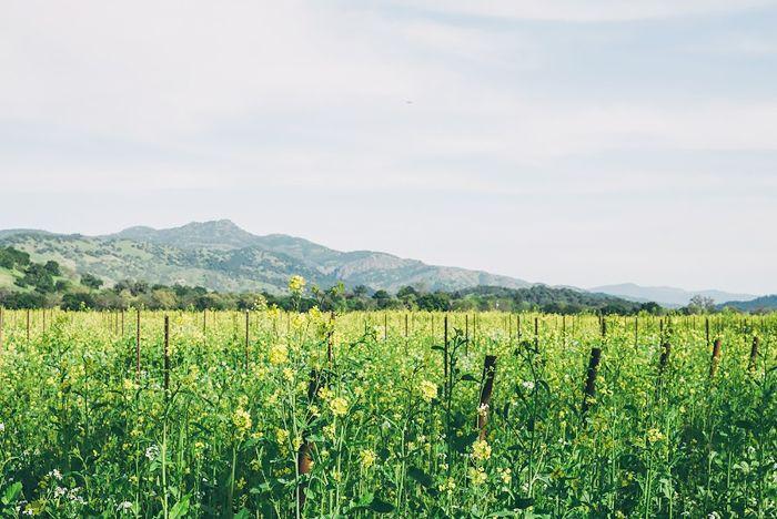 Escapadas del Día del Trabajo - Napa Valley, CA