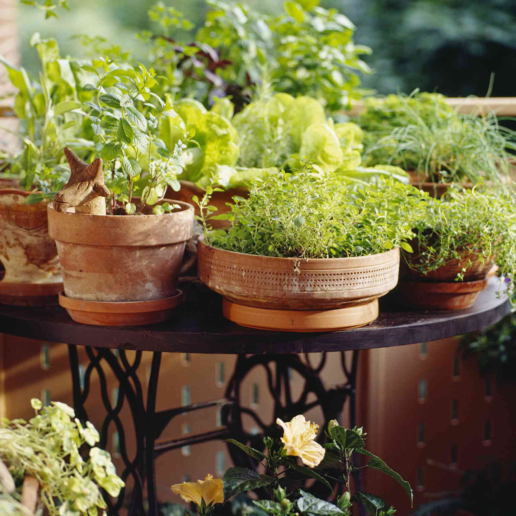 culinary herb plants in terra cotta pots on bistro table on patio