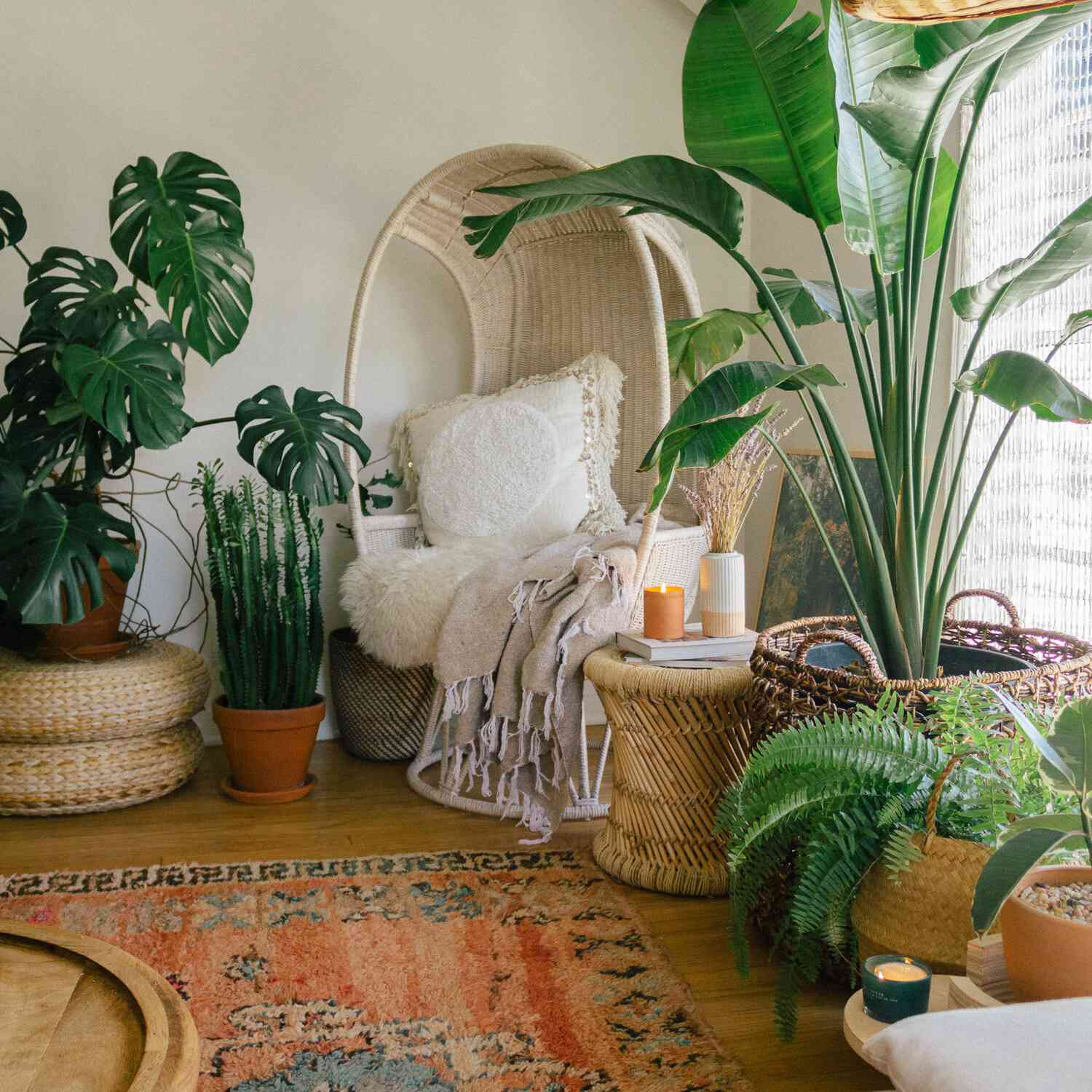 Living room plant oasis with basket chair and boho accents