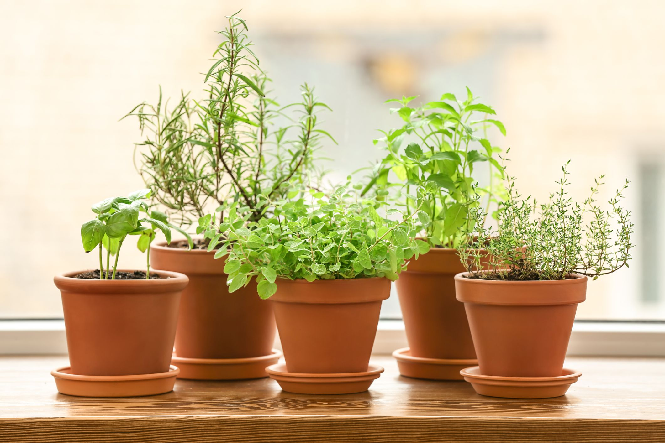 How to Grow Fresh Basil Right at Home For Your Next Caprese Salad