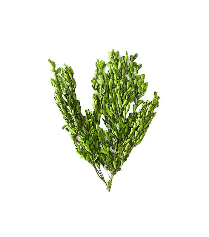Anthropologie Preserved Boxwood Bunch