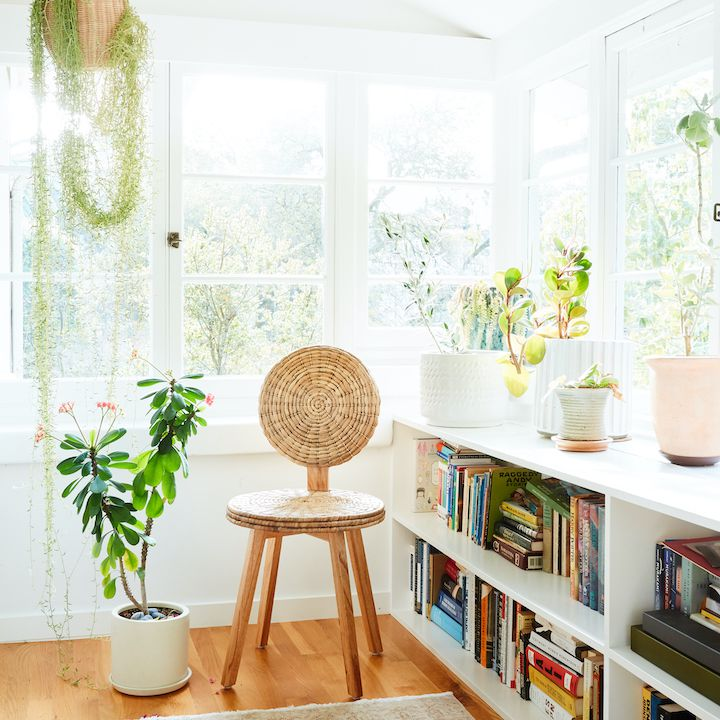 Serene book room with hanging plants and rattan chair.
