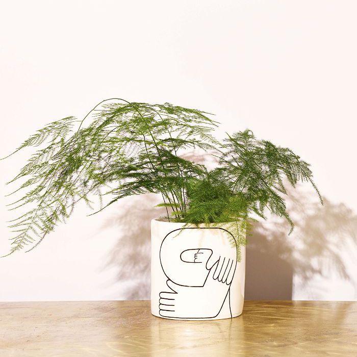 Low-Light Indoor Plants — Asparagus Fern