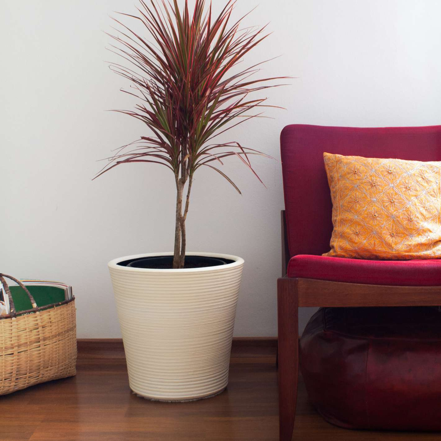 small pink-leaved dracaena plant in white ceramic pot next to magenta couch with orange pillow