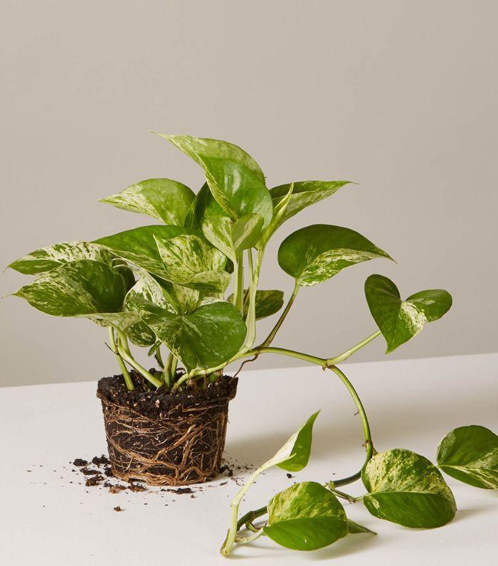 The 10 Best Indoor Hanging Plants That