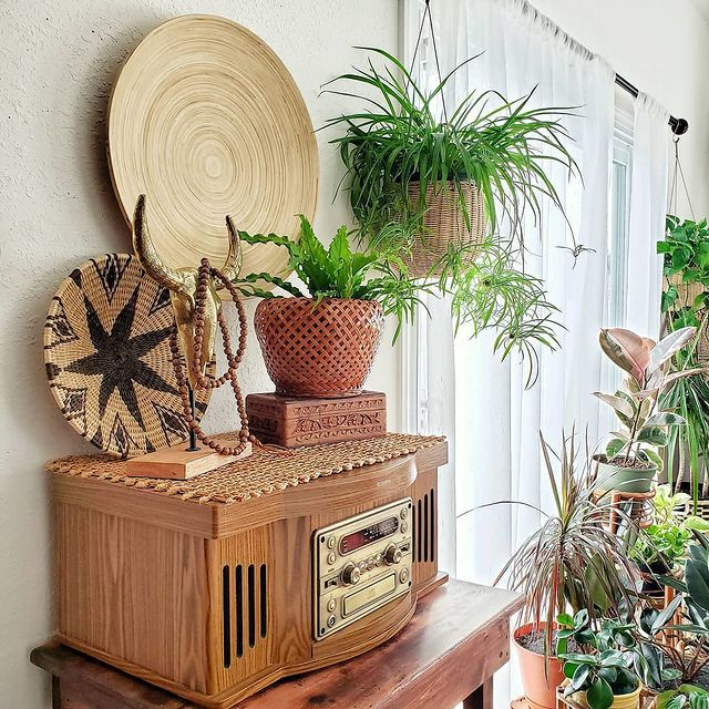 Hanging spider plant and other plants next to a wood record player