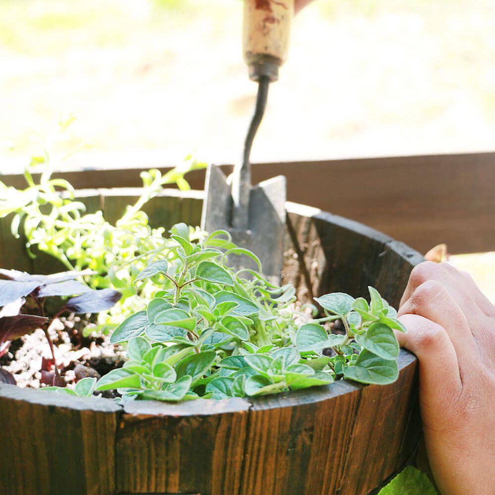 Shovel in pot of herbs.