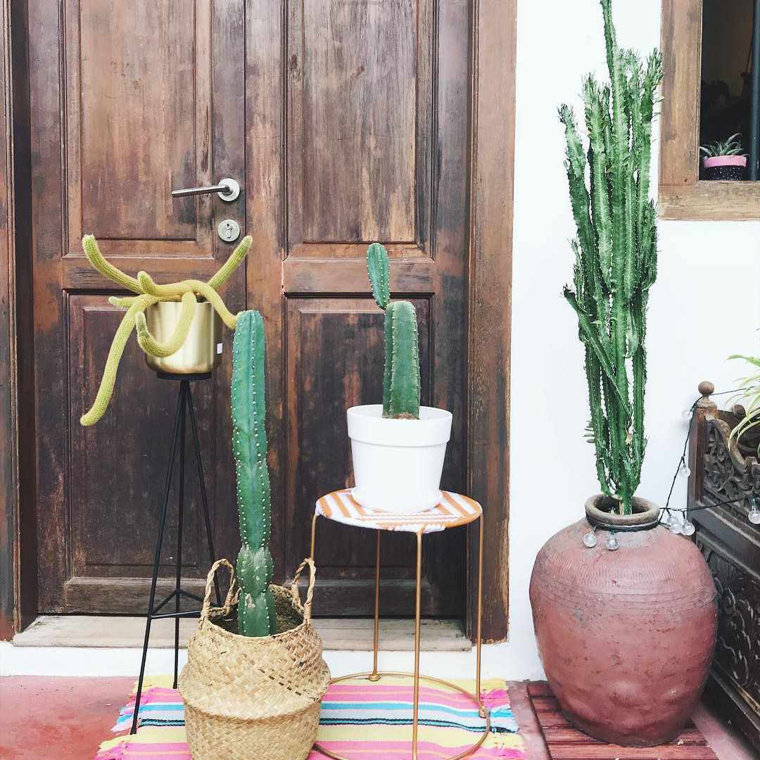 Outdoor cacti on porch.