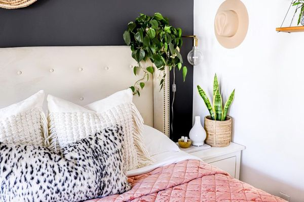 Bedroom with philodendron plant.