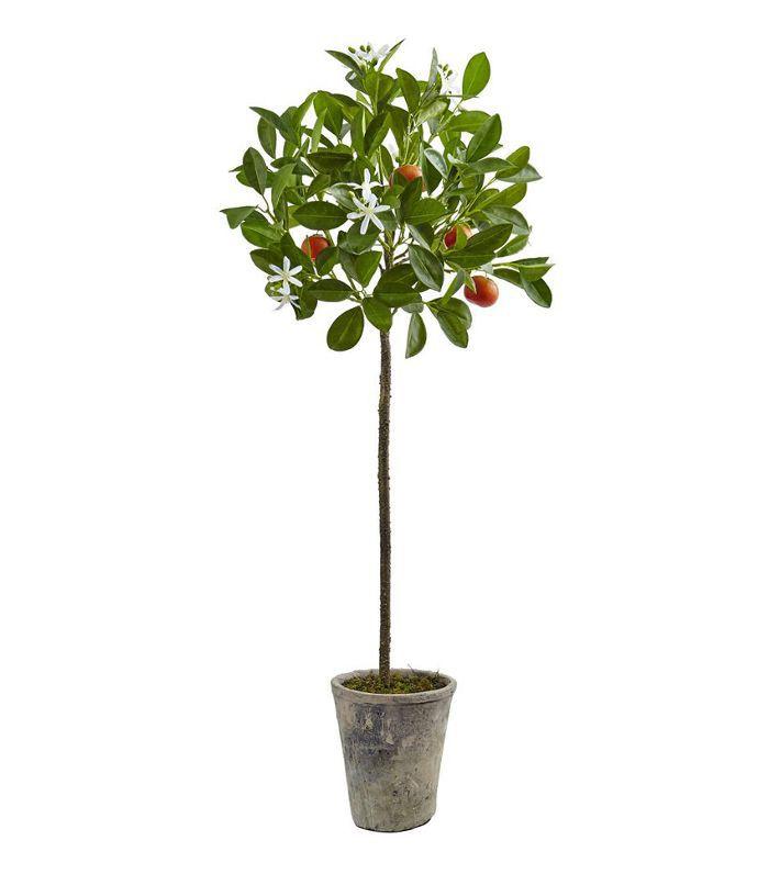 Target potted Orange tree