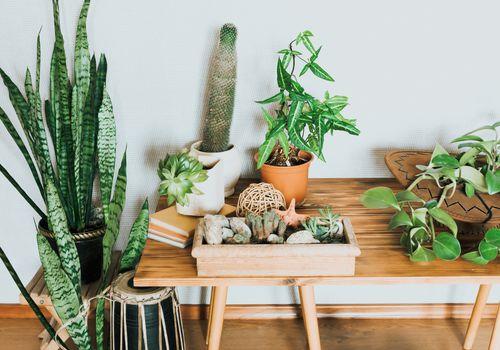 plantas en un escritorio