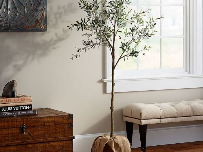 Here S How To Care For An Indoor Olive Tree
