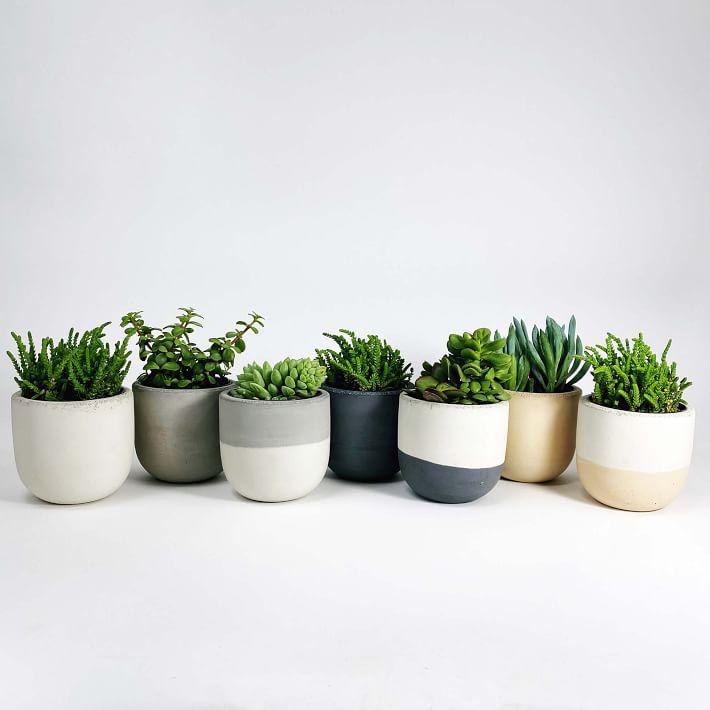 SETTLEWELL Concrete Bowl Planter