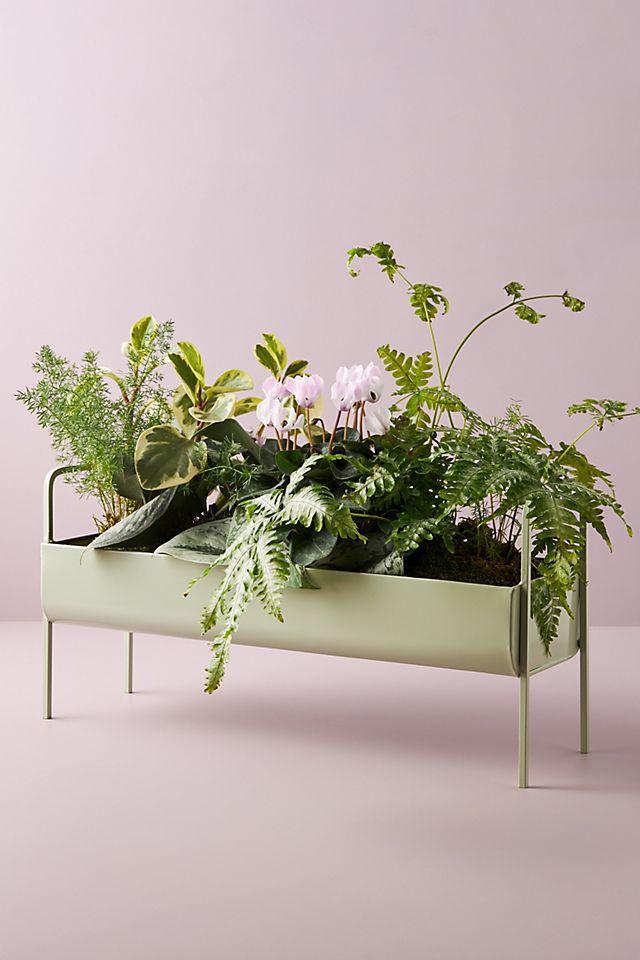 minty trough planter