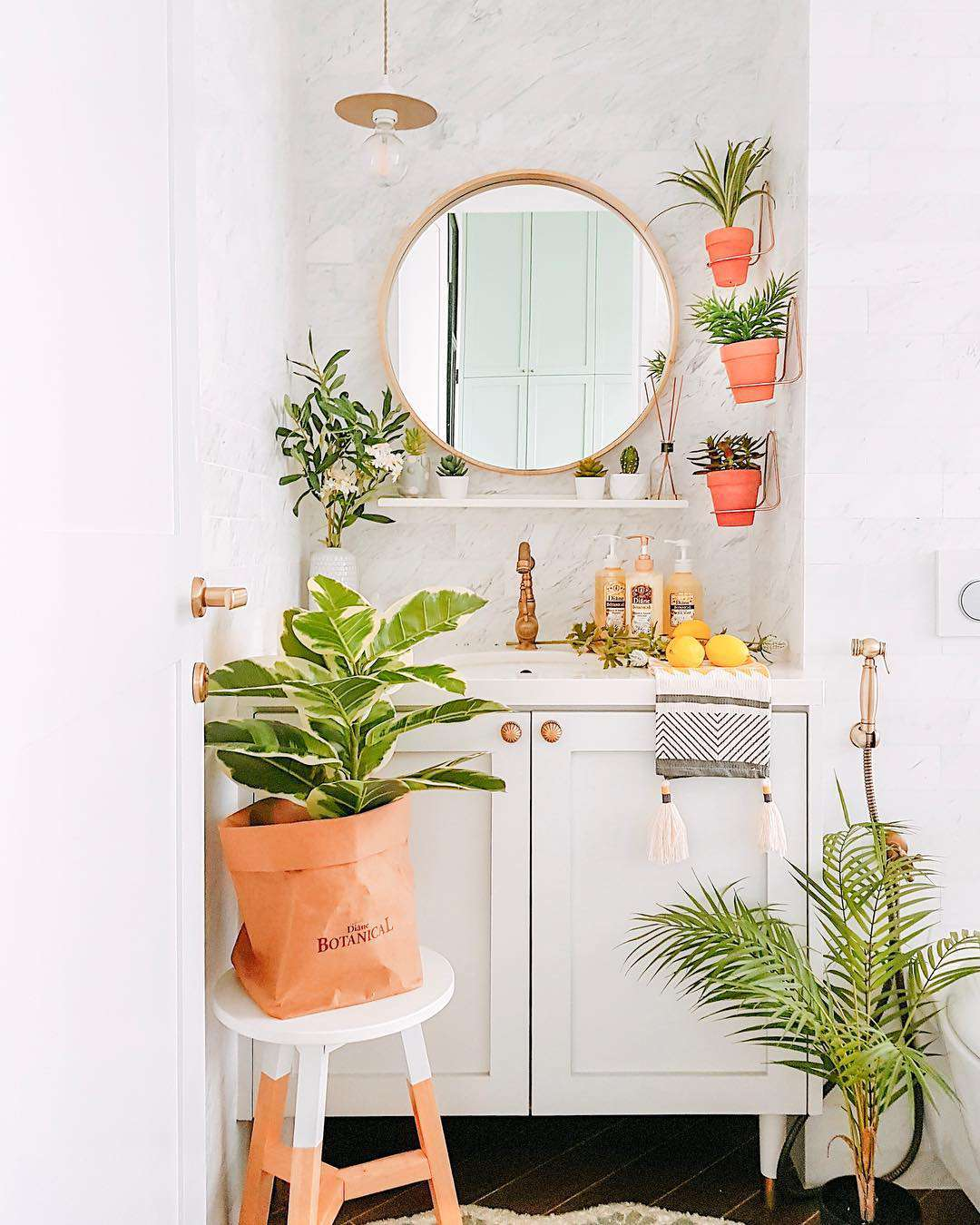 Plants next to sink