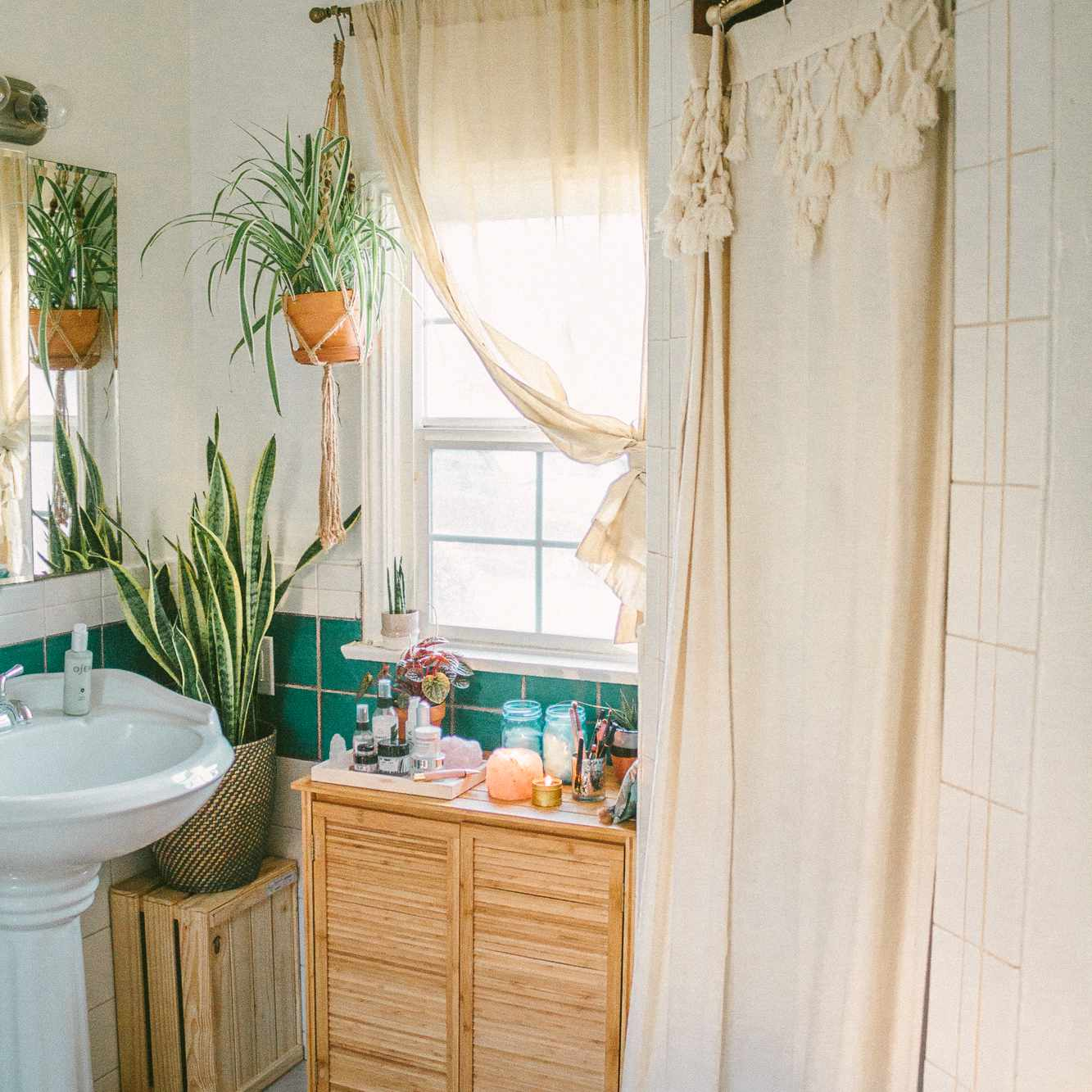 Spider plant hanging in a bright bathroom