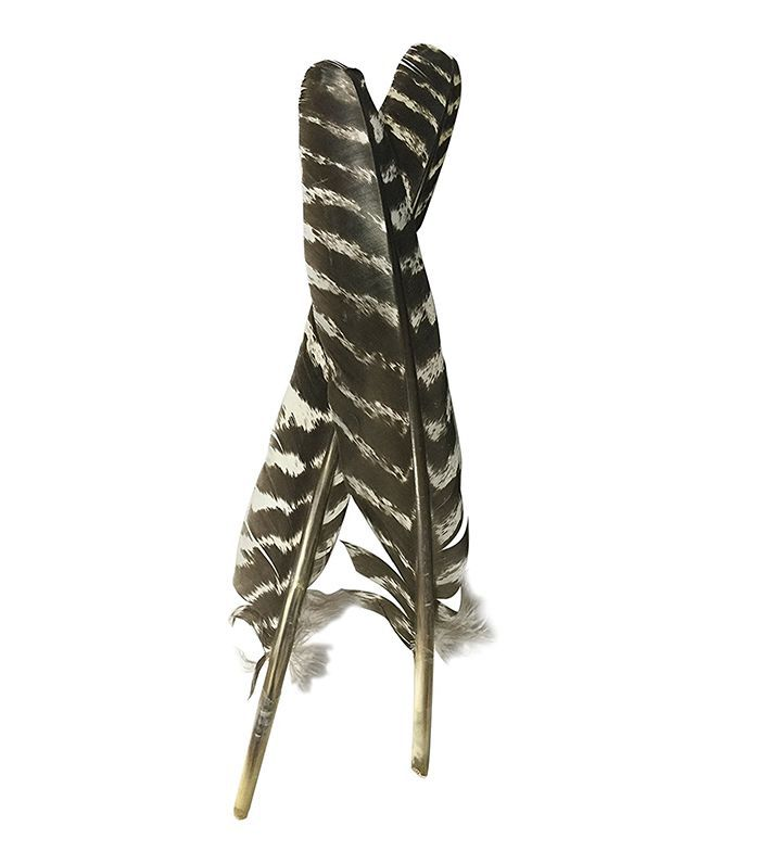 Pluma de manchado de pavo barrado de grado A (sin manchas, cortes, piezas faltantes)