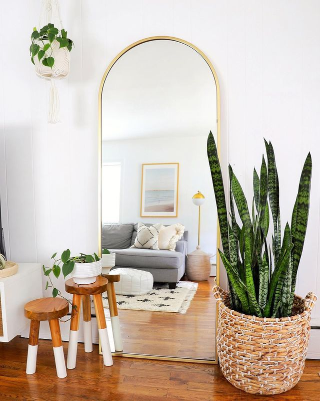 Large snake plant in a basket next to a standing mirror in a living room