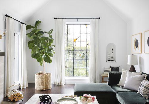 Living room with large fiddle leaf fig.