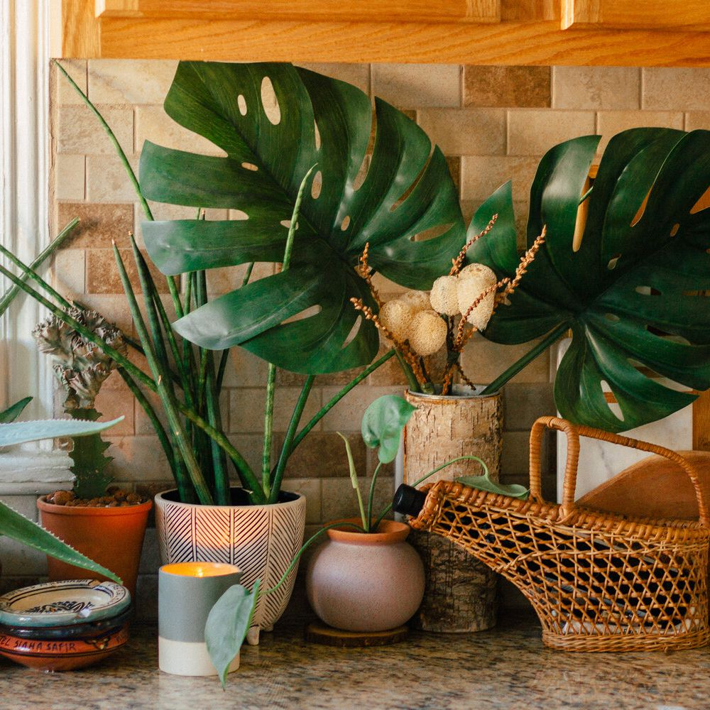 These 10 Plants Will Thrive in Your Kitchen