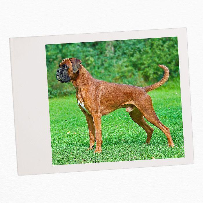 razas de perros familiares