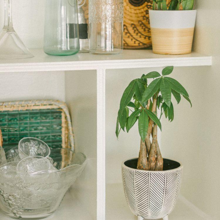Small money tree on a styled kitchen shelf