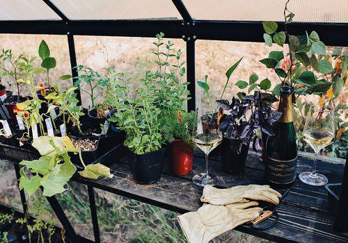 Herbs outside.